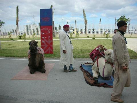 TunisiCammelli